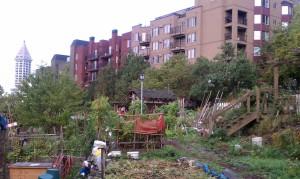 Danny Woo Garden plots